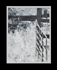 A black and white infrared image of a pasture enclosed by open gates thumbnail