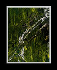 small image of an abstract rainforest thumbnail